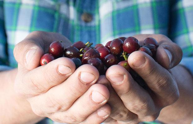 スペシャルティコーヒー(農園)